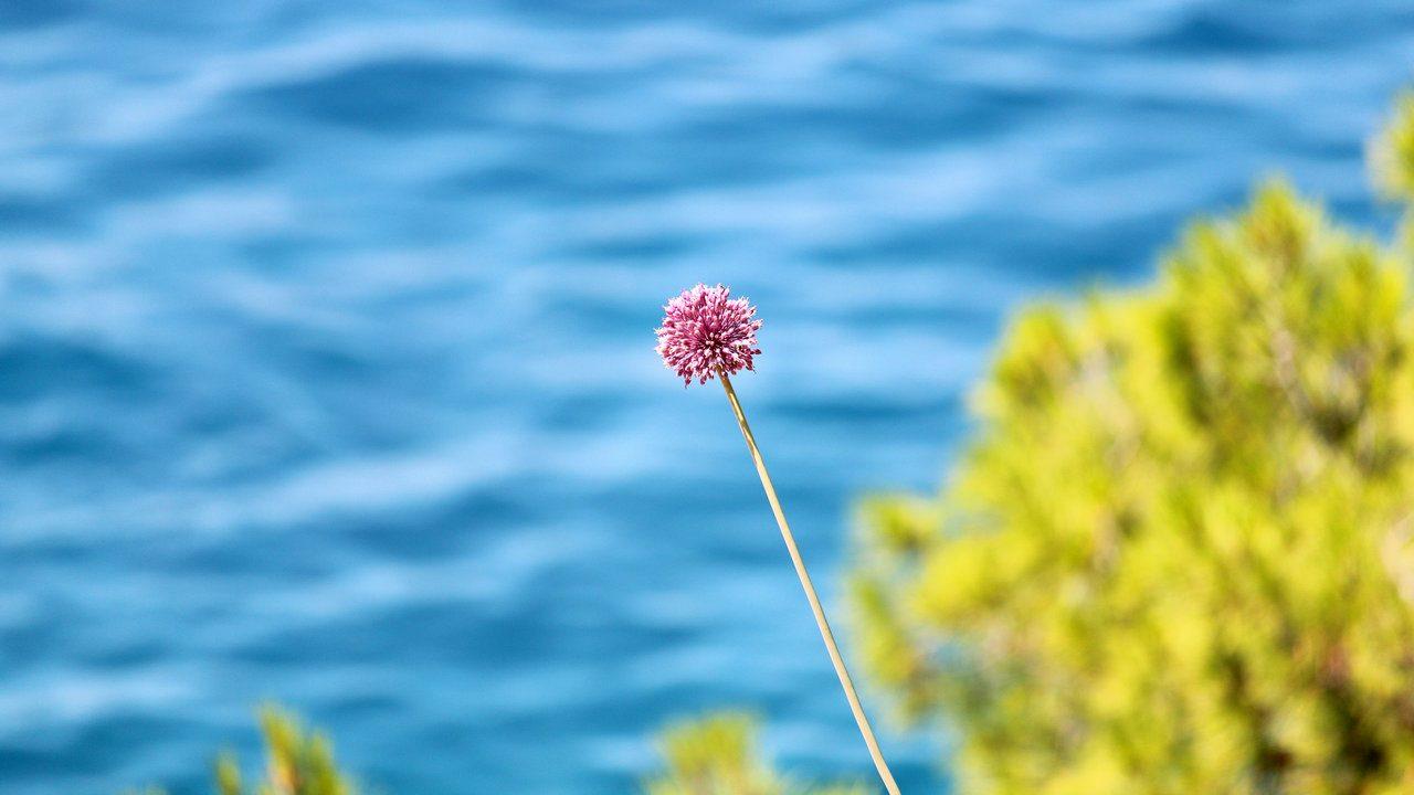 botanicamediterranea-001