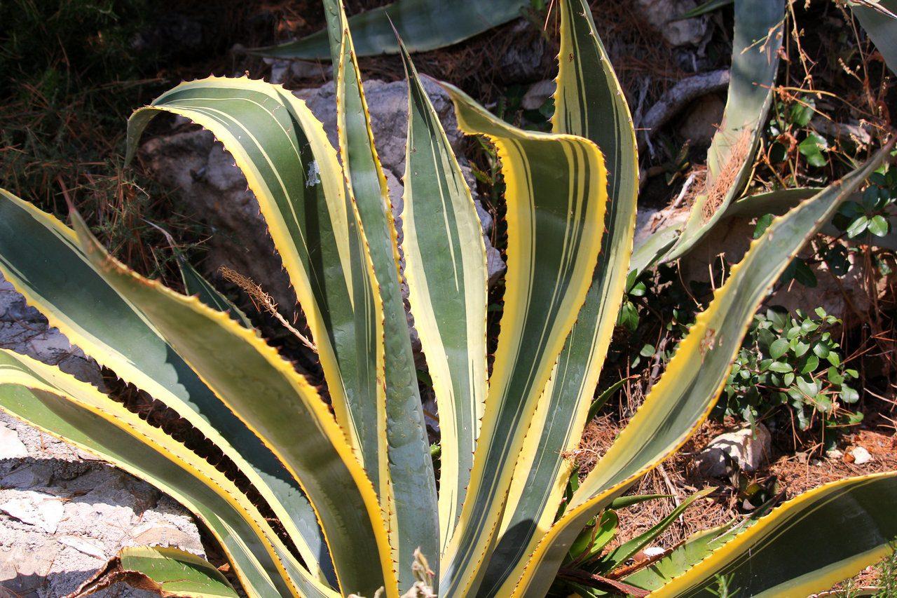 botanicamediterranea-004