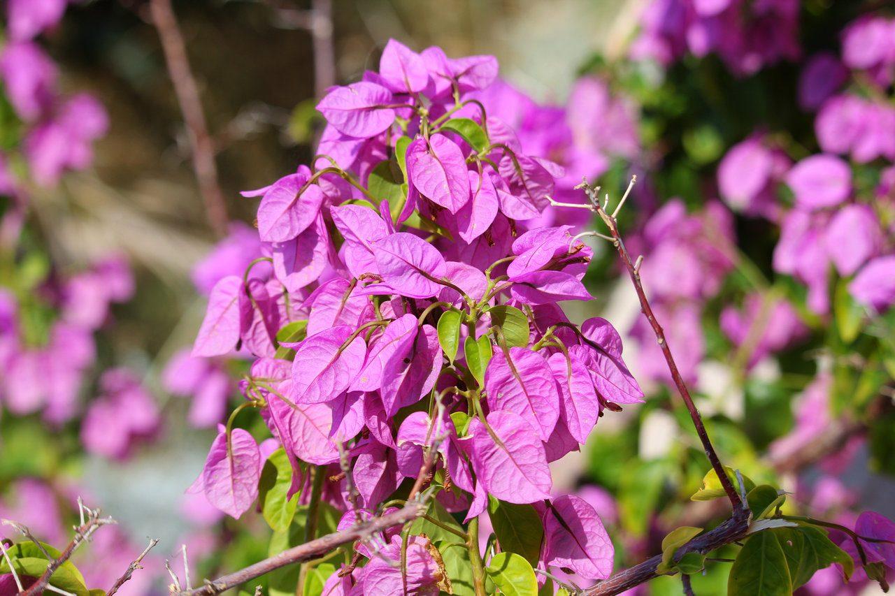 botanicamediterranea-006