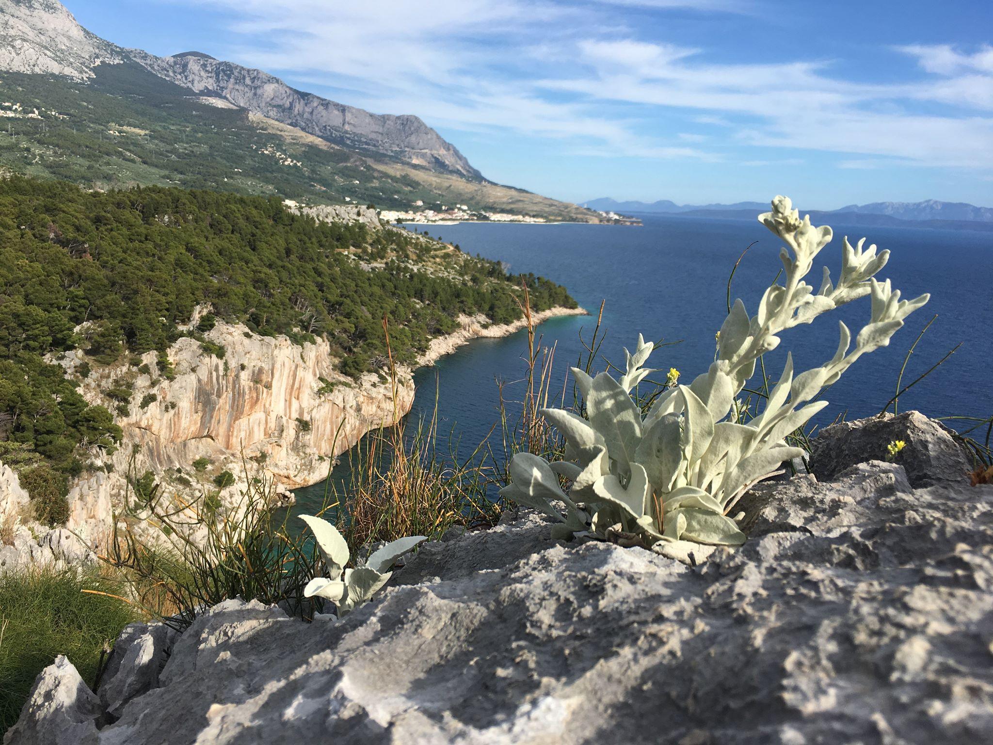 Corona Makarska